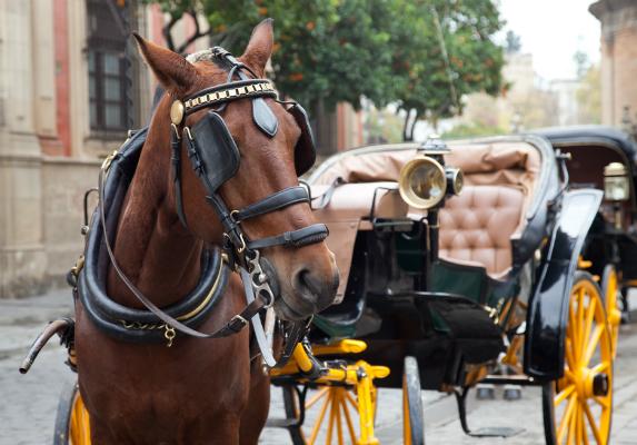 Puerto Rico polgármestere kitiltotta a lovaskocsikat San Juan-ból.